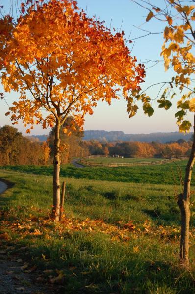 Un soir d'automne aux Bonshommes